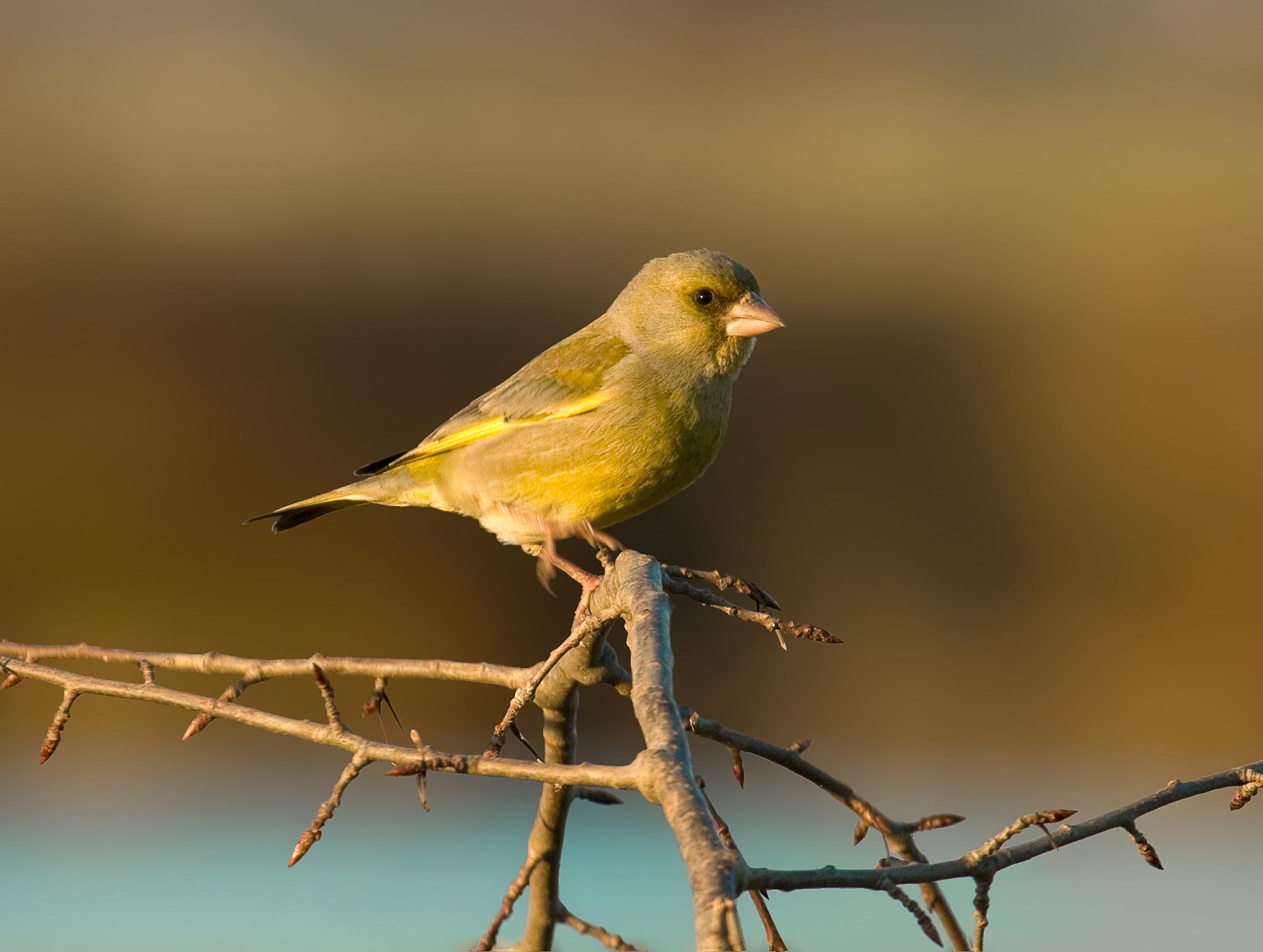 Colorful Birds Of Australia