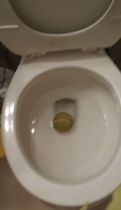 tennis ball in the toilet