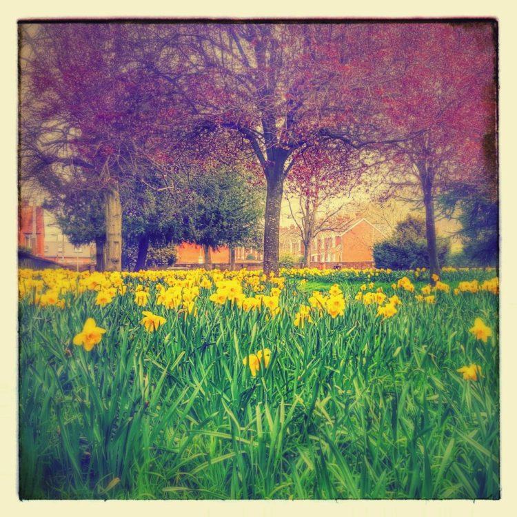 daffodils salisbury arts centre
