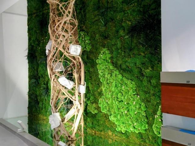 Jardines verticales de planta conservada en Mallorca