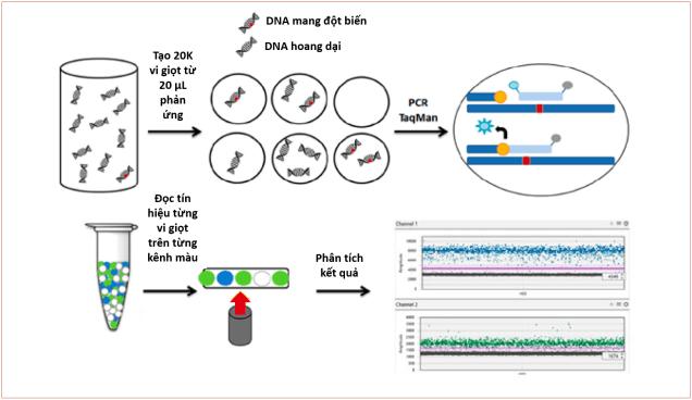 PCR kỹ thuật số