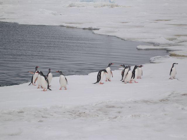 Antartida tours de Google Street View