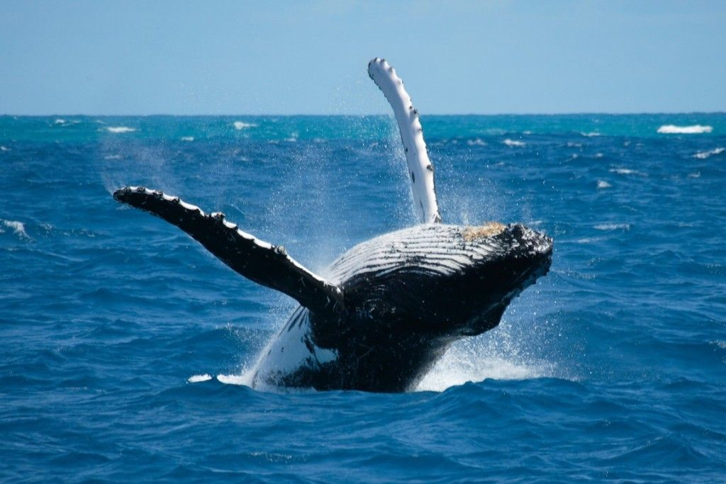ver ballenas qué hacer y qué ver en Puerto López Ecuador Sudamérica