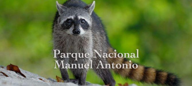 Bicho de cemento en el Parque Nacional Manuel Antonio