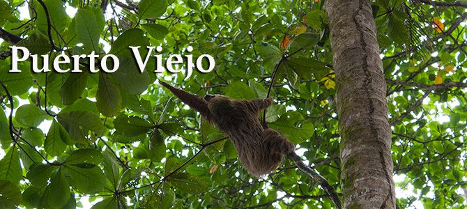 Pura Vida en Puerto Viejo
