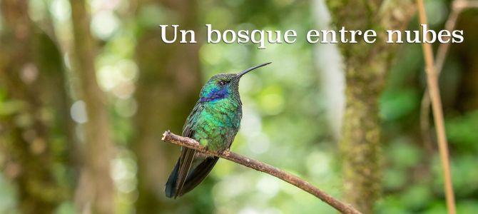 Monteverde: un bosque entre nubes