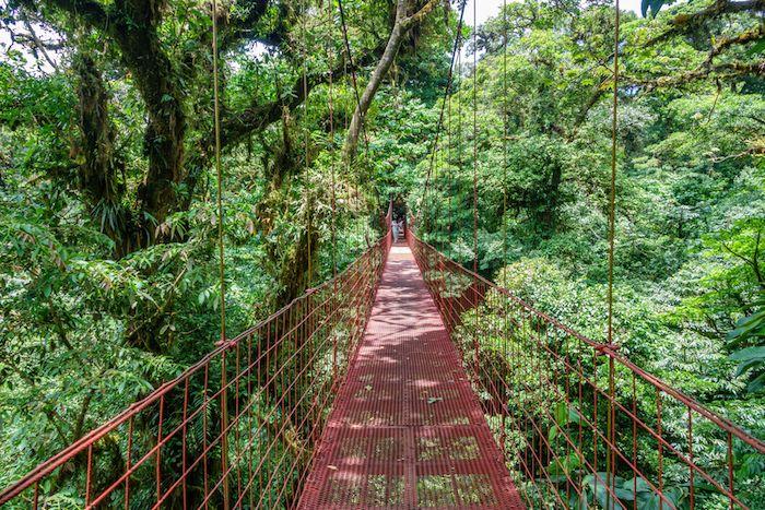 puentes colgantes en el bosque Qué ver y qué hacer en Monteverde Costa Rica