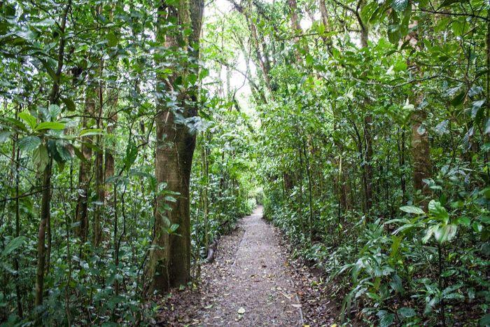 Bosque nuboso - Qué ver y qué hacer en Monteverde Costa Rica