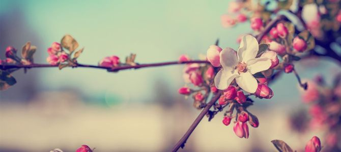 Destinos europeos que tienes que visitar esta primavera
