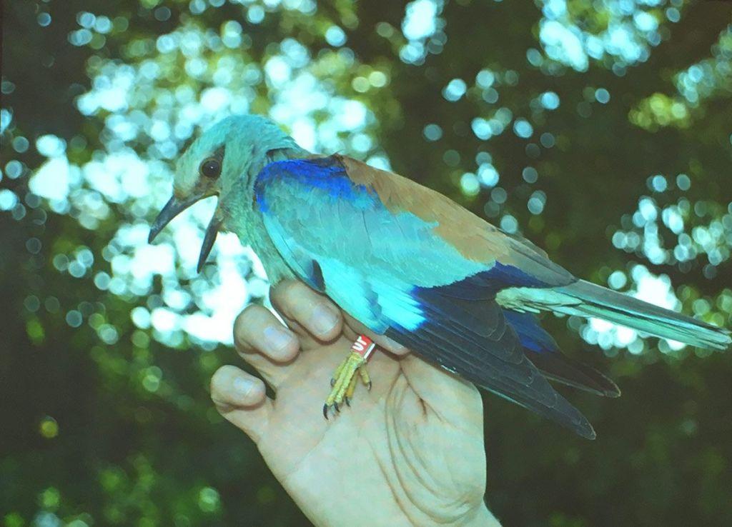 aves en el PNAE