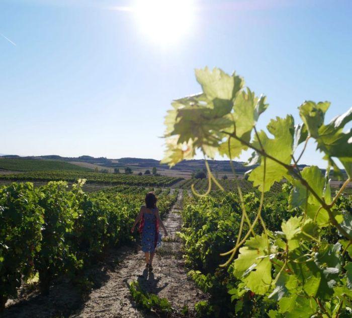 Qué ver en La Rioja - viñedos