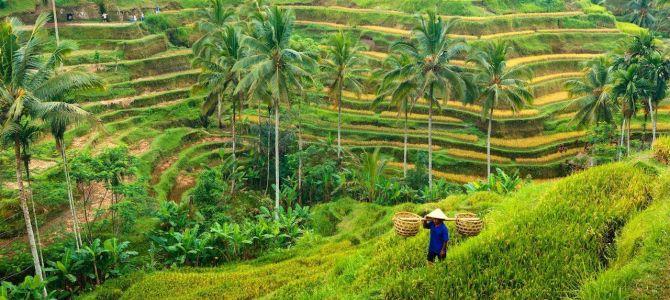 Bali: las mejores cosas que hacer en Ubud
