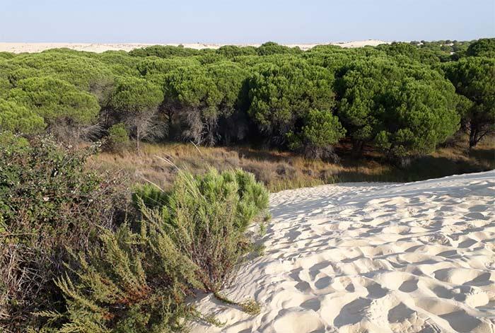 Parque Nacional de Doñana - viajar en verano coronavirus