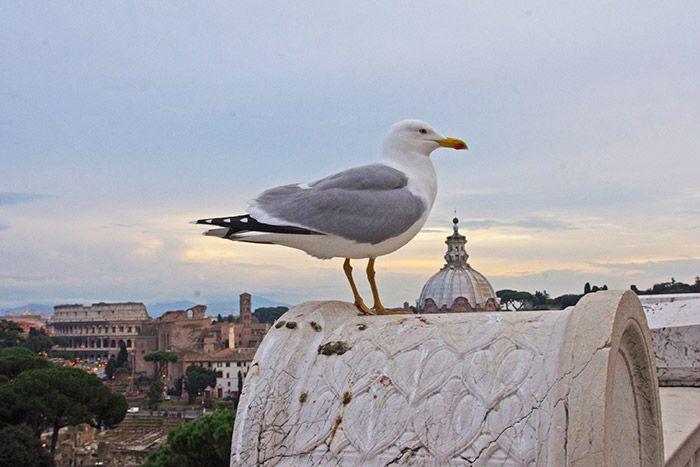 Una gaviota en los tejados de Roma