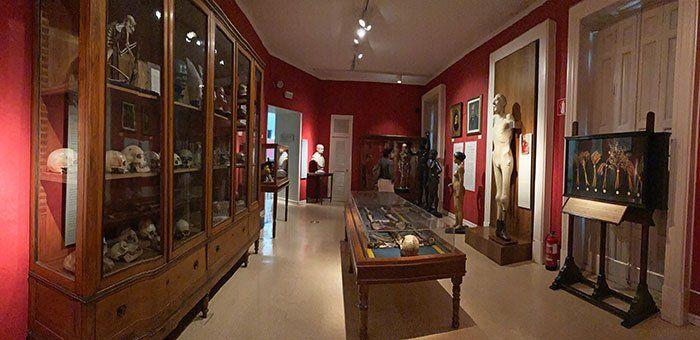Sala orígenes en el Museo de Antropología de Madrid