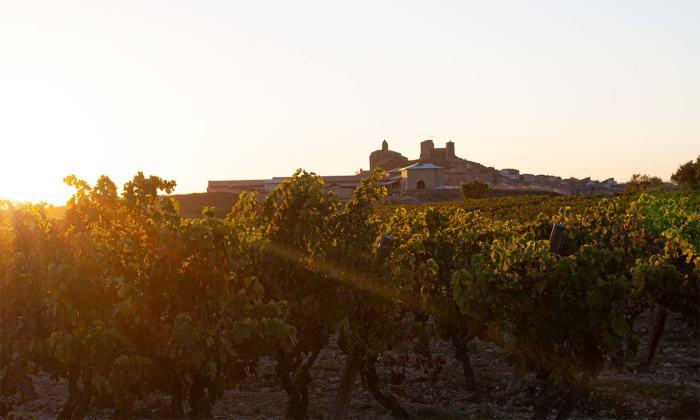 Atardecer en los viñedos en La Rioja