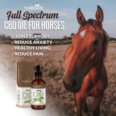 Benefits Holistapet CBD Oil for Horses