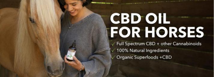 Holistapet CBD Oil for Horses Benefits