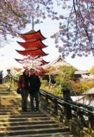 Japan_Miyajia zur Kirschblüte