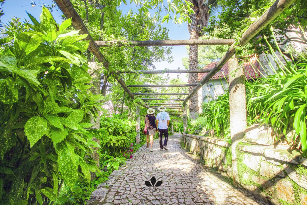 Pedestrian path flanked by passion fruit