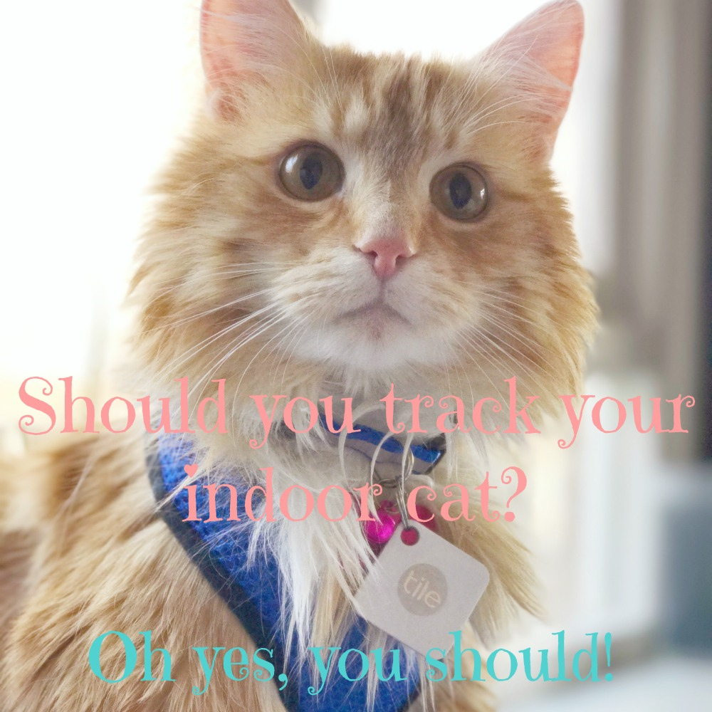 Should you track your indoor cat? Oh yes, you should!