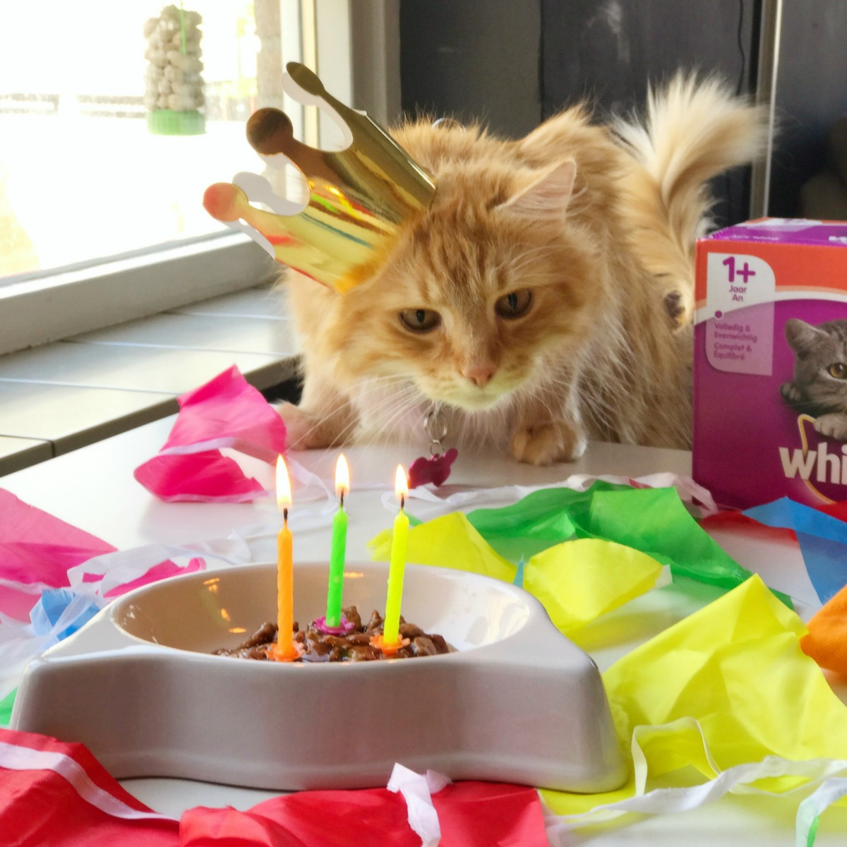 Sintra the Cat 3rd birthday: Enjoying the most favorite part of my birthday