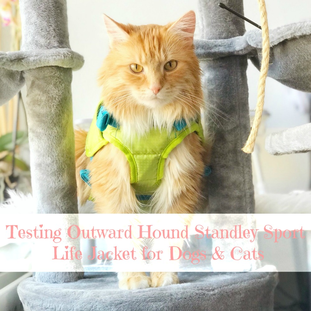Testing Outward Hound Standley Sport Life Jacket for Dogs & Cats