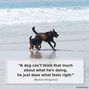 a dog at carmel beach quote