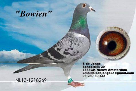 """Deze rechtstreekse A.P.Overwater duivin komt uit de lijn van de """"Dure""""en van Moeders kant """"As 115"""""""