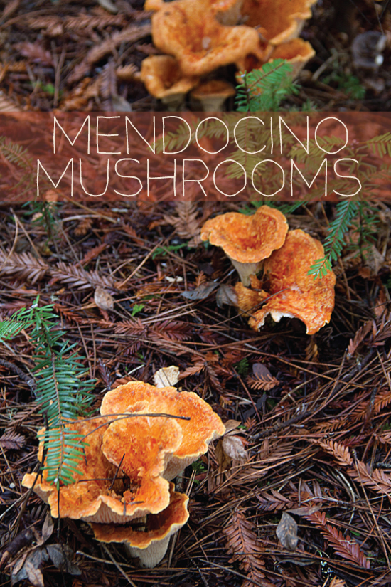 Mendocino Mushrooms
