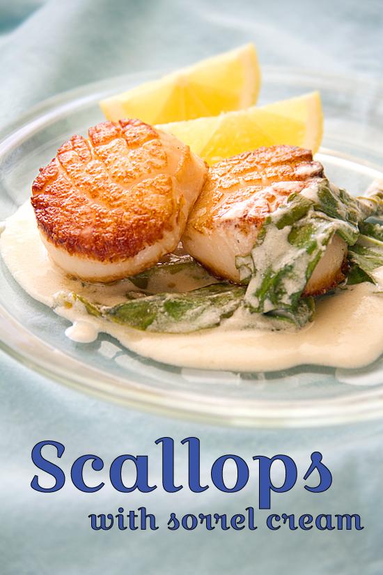 Seared Scallops with Sorrel Cream