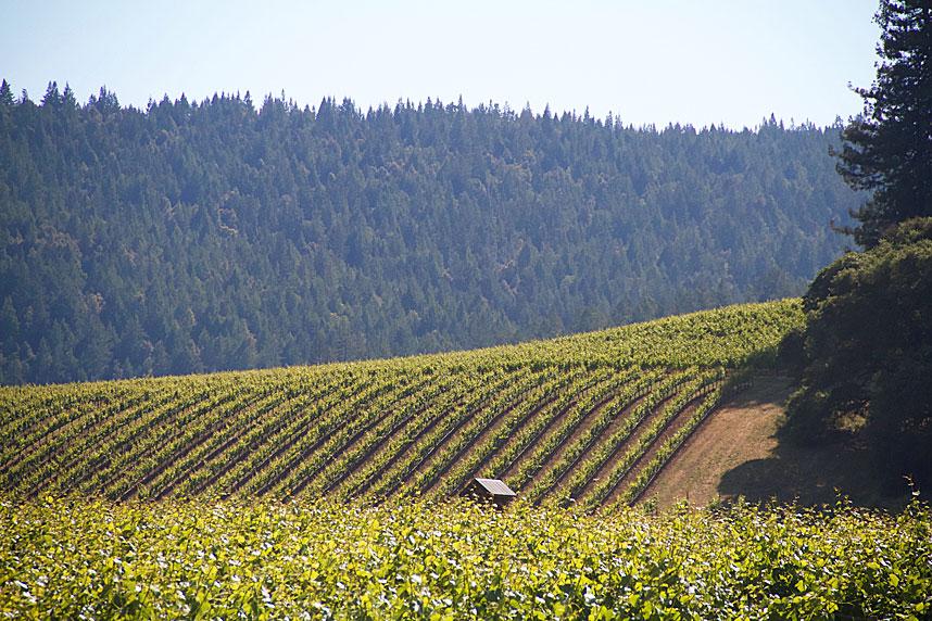 Anderson Valley Vineyards