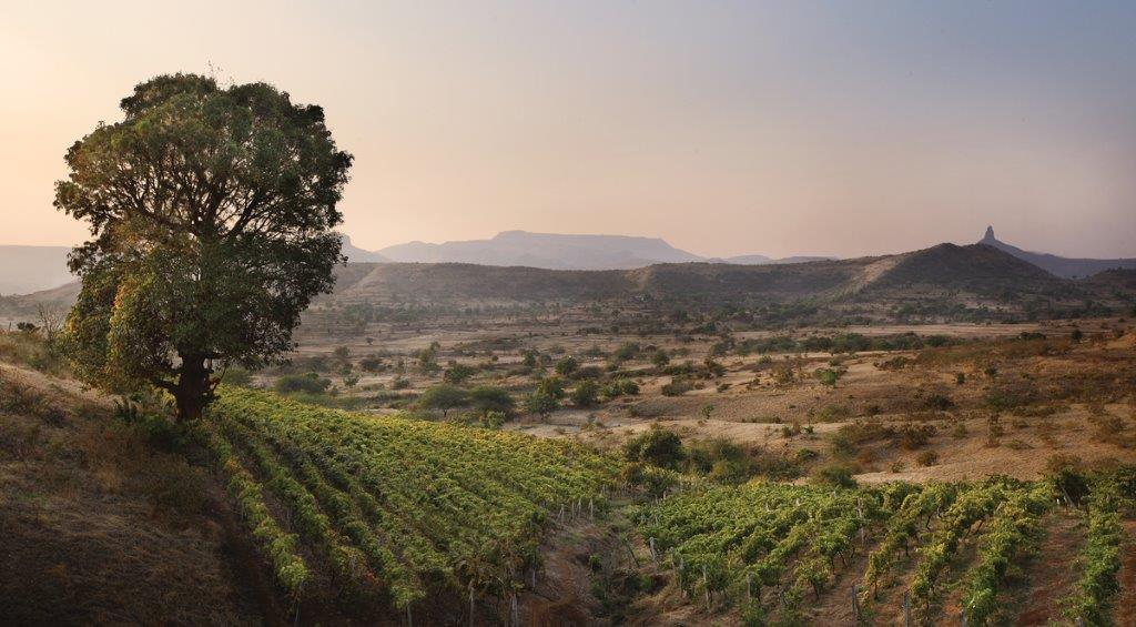 Grover Zampa Vineyards