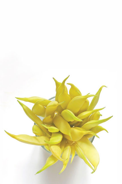 Italian Yellow Wax Beans