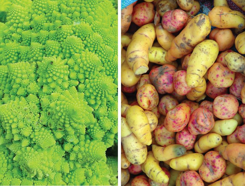 Romanesco Cauliflower and Oca