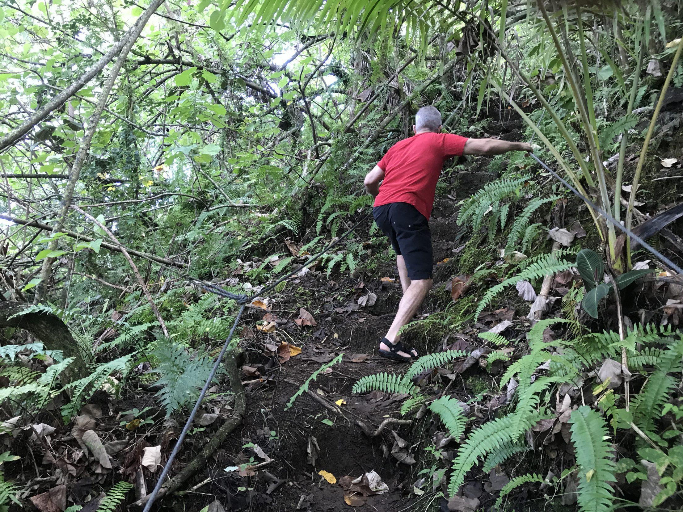 Tahiti Jungle