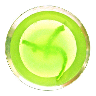sippitysup's lime gimlet cocktail