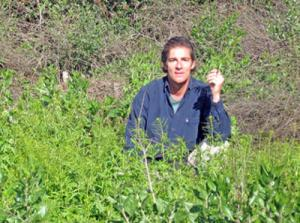Sippity Sup foraging for mustard