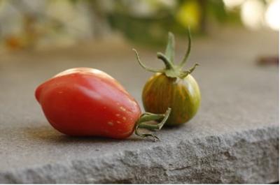 polish paste and green zebra tomato