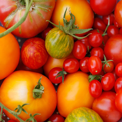 heirloom tomatoes the jewels of summer