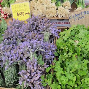 lavender from Ojai