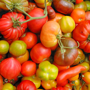 tomatomania