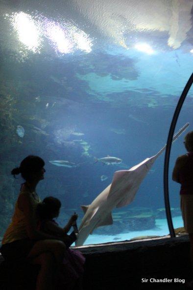 acuario-mandalay