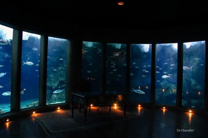 coruna-acuario