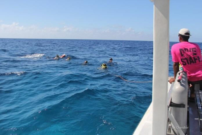 bahamas-snorkel-tiburones