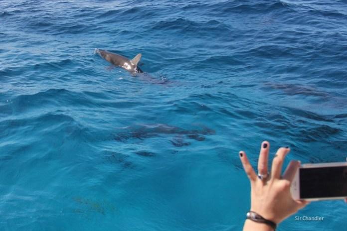 bahamas-tiburones-mar