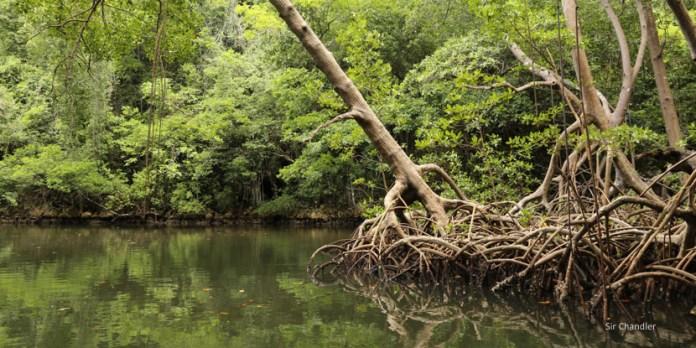 El parque nacional Los haitises en República Dominicana