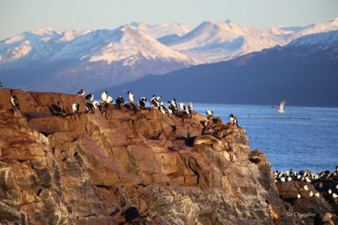 ushuaia-beagle-paseo-6794