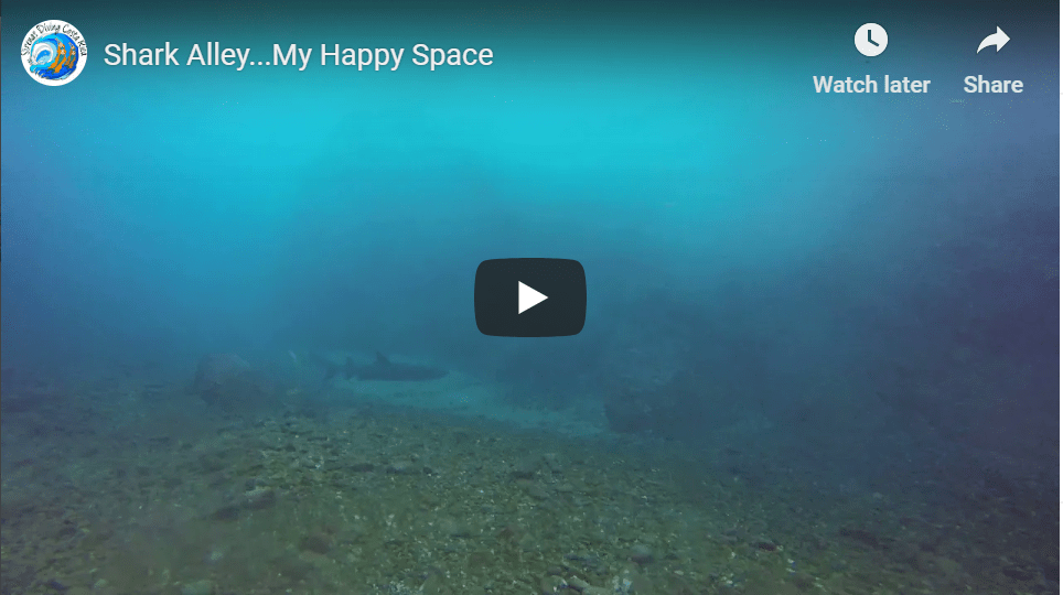 Shark Alley…My Happy Space