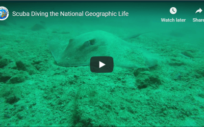Diving the National Geographic Life